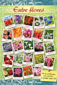 Entre flores: portada